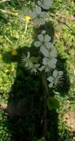 Ombre et fleurs